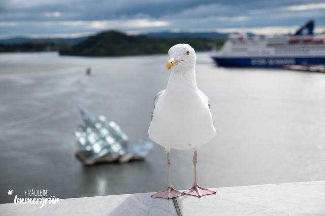 Oslo – Kleine Möwe auf der der Oper am Hafen