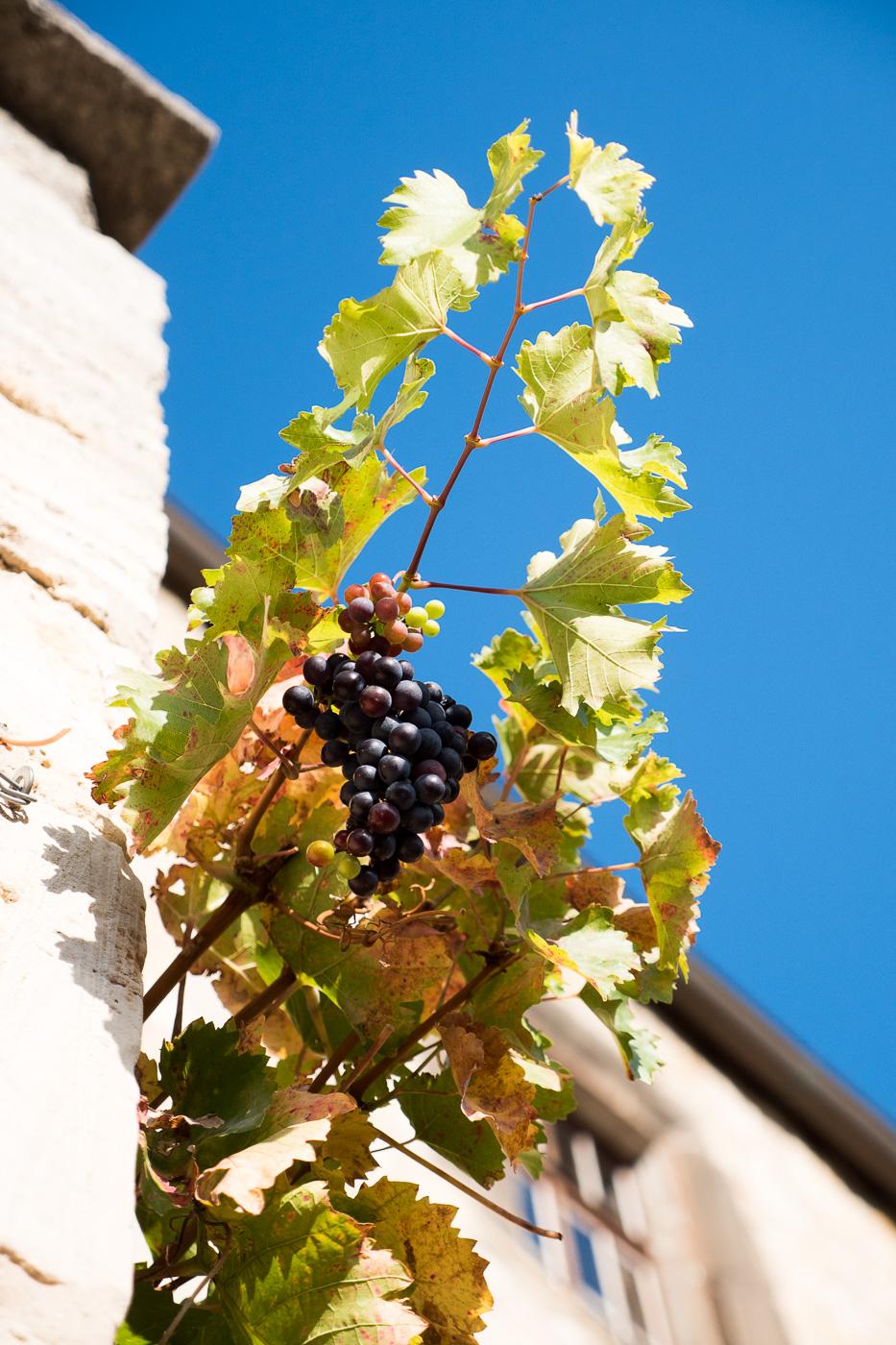 Freyburg Saale Unstrut Region – Wandern durch Weinregion Freyburg und Besuch Rotkäppchen Manufaktur